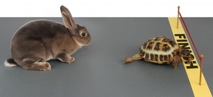 """""""Slow and Steady Wins the Race"""": Good Advice for Job Candidates"""